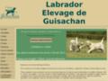 Labrador, chiot labrador Guisachan